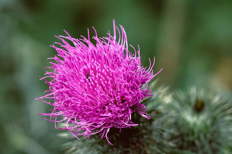 Flowers-5372.jpg