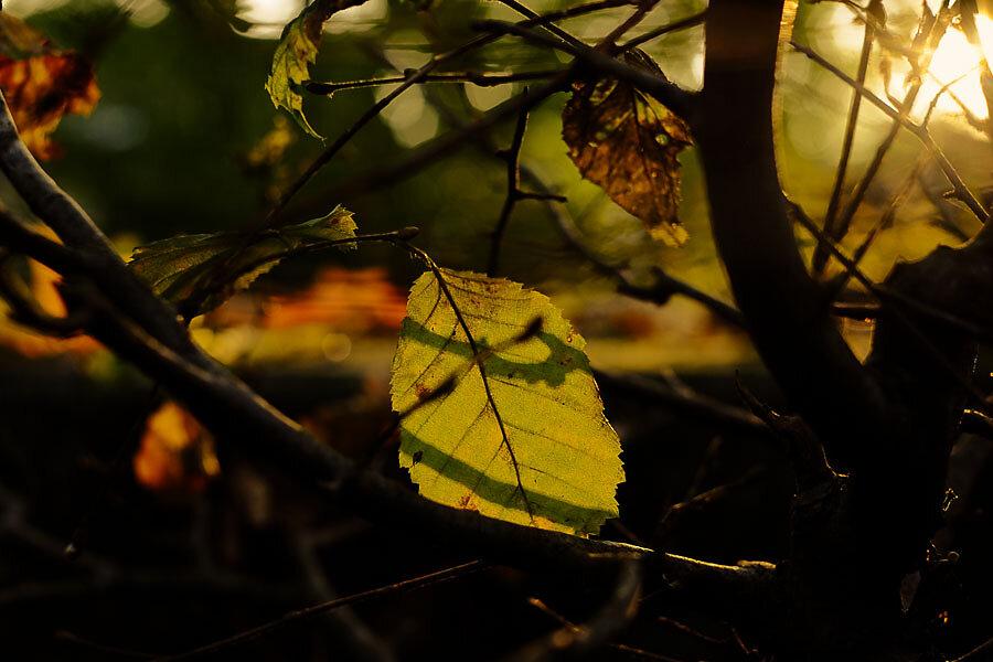 Autumn-28-14.jpg