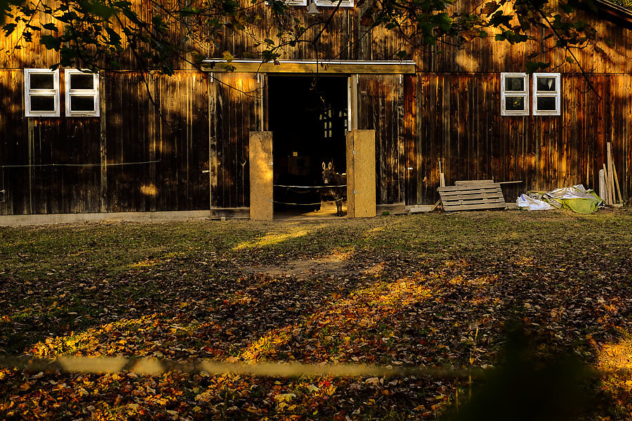 Autumn-28-5.jpg